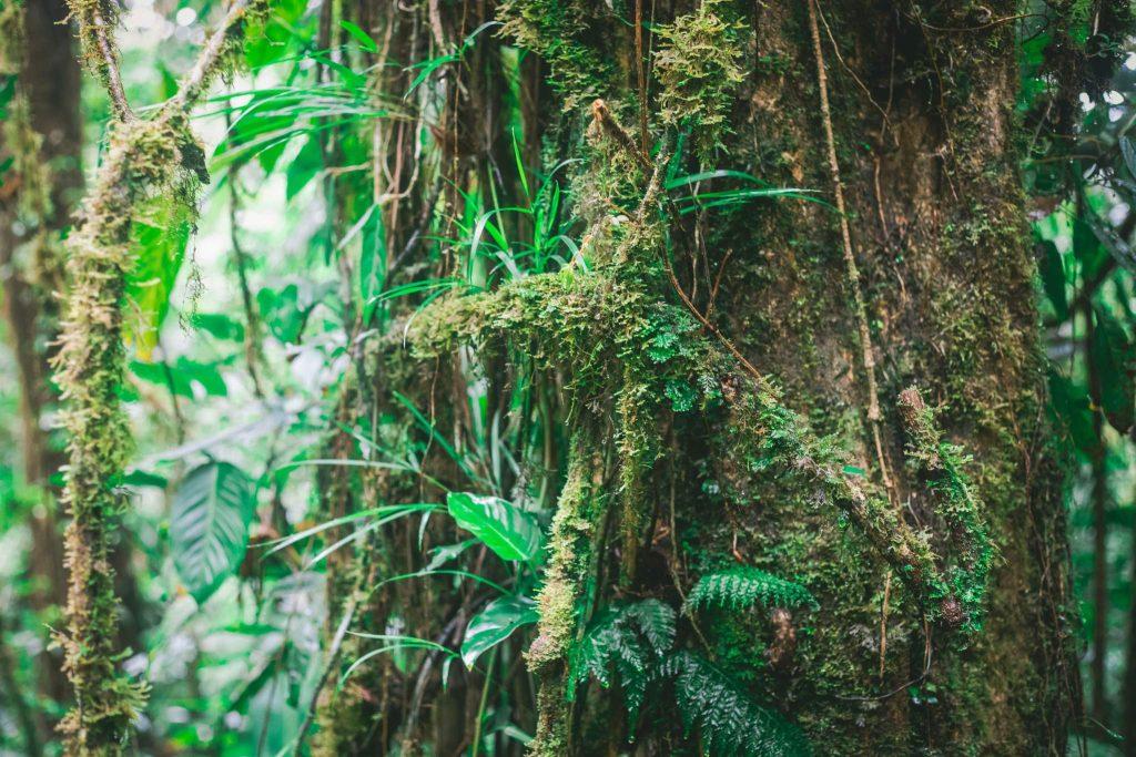 Monteverde cloud forest Epiphytes