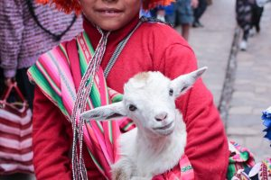 Some of these incredibly photogenic locals , kids in Pisaq seem to all be posing with baby goats