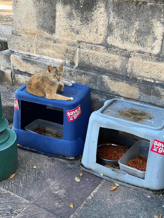 San Juan save a gato